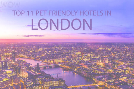 Where Is the Best Pet Friendly Hotels in London?